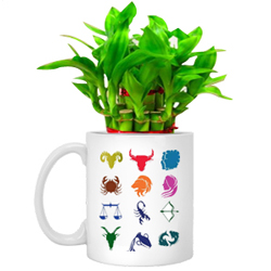 Cheerful Set of Lucky Bamboo Tree in Sun-sign Mug