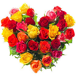 Luminous Hearty Selection of 30 Mixed Roses