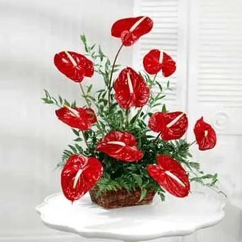 Stunning Red Anthodium Arrangement