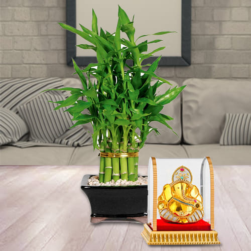 Two Layered Good Luck Bamboo Plant in Glass Pot with Lord Vinayak Murti