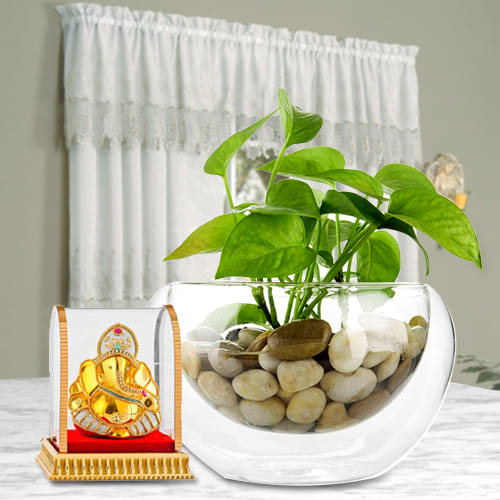 Auspicious Collection of Vighnesh Ganesh Idol with Lively Money Plant in a Glass Vase