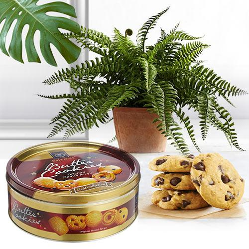 Attractive Gift of Bostern Fern Plant with Cookies