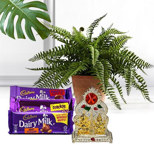 Nurturing Bostern Fern Plant with Puja Mandap N Chocolates