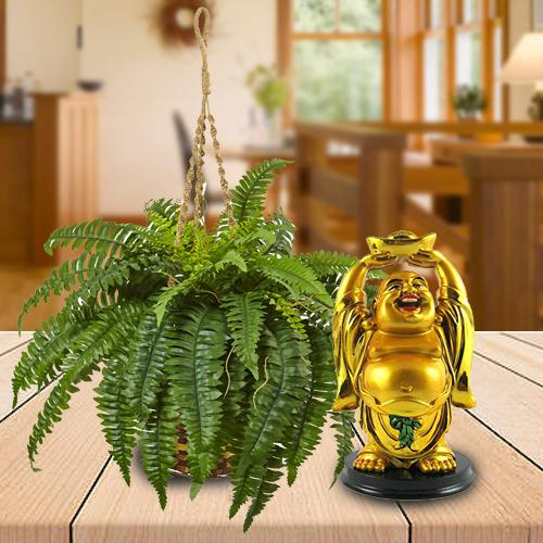 Elegant Selection of Hanging Bostern Fern with Buddha Idol
